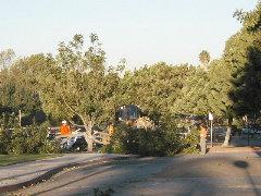 Scherer Trees down Jan. 17/03