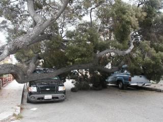 St. Irmo tree 6/11/05
