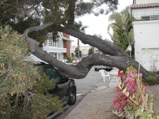 St Irmo tree 6/11/05