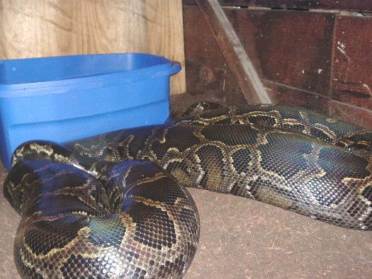 Python, July 25/05