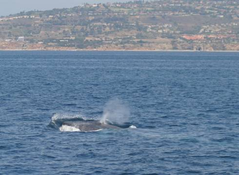 Whales Aug 2005