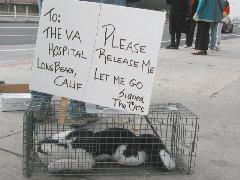 VA cat demo Dec. 14/02