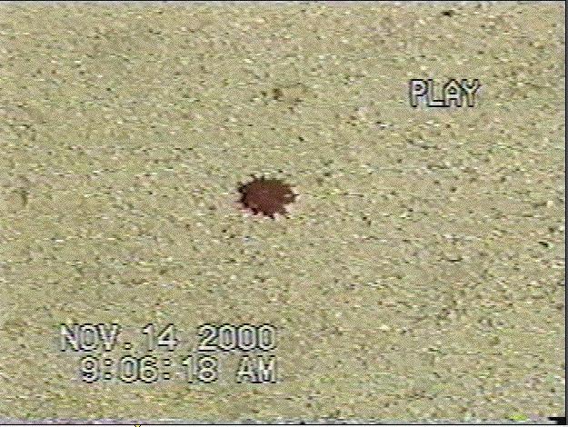 Blood on Ocean Blvd. sidewalk