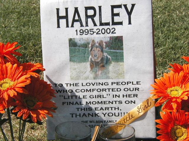 Harley #2