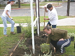 Stearns park planting Oct 12/02