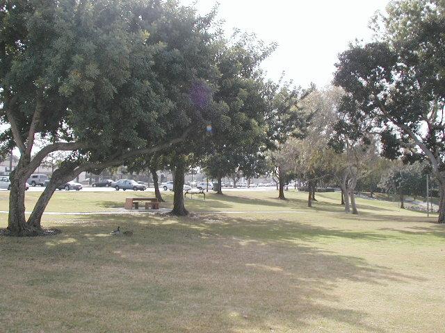 Scherer trees 1