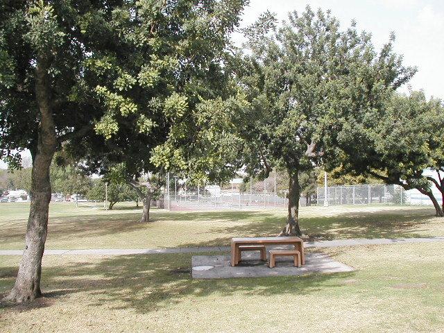 Scherer trees 3