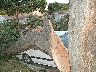 NLB tree 4/24/04